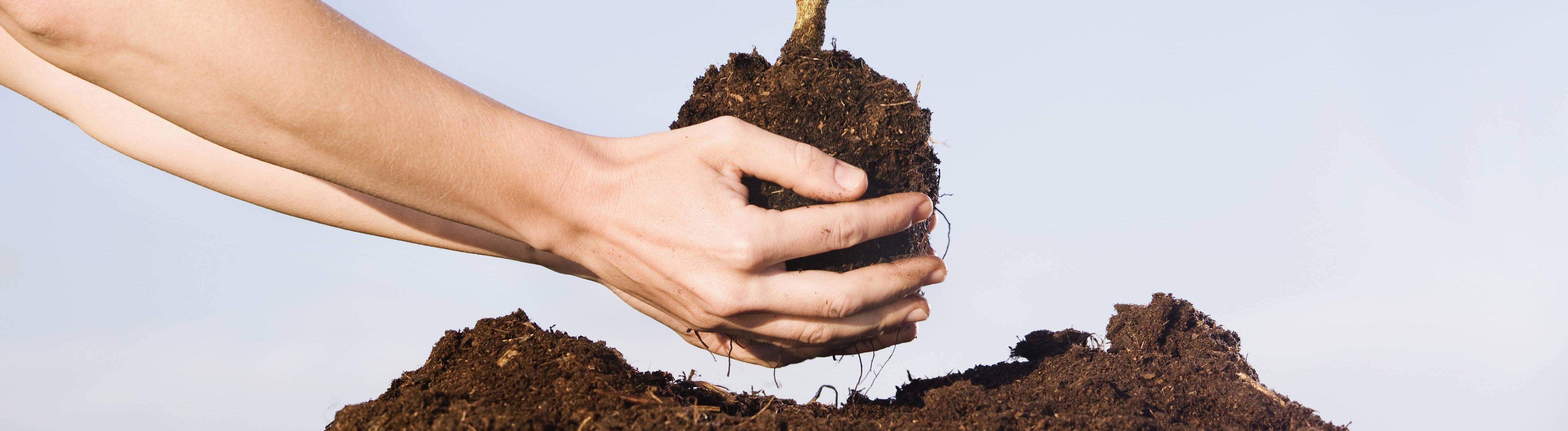 Mensch pflanzt Baumsetzling