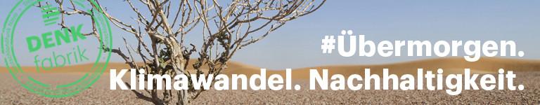 Ein einzelner Baum in der Wüste von Oman