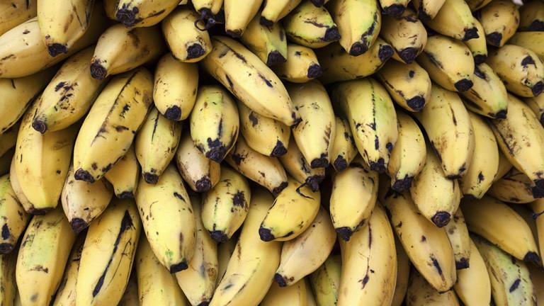 Bananen-Krise wegen Pilzbefall