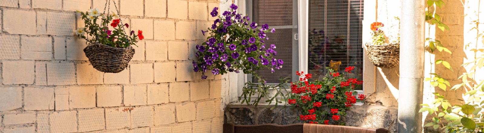 Blumen auf einer Terasse