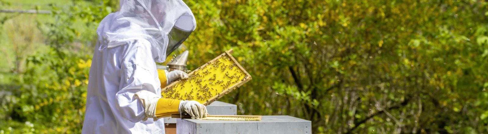 Imker bei der Pflege eines Bienenvolks
