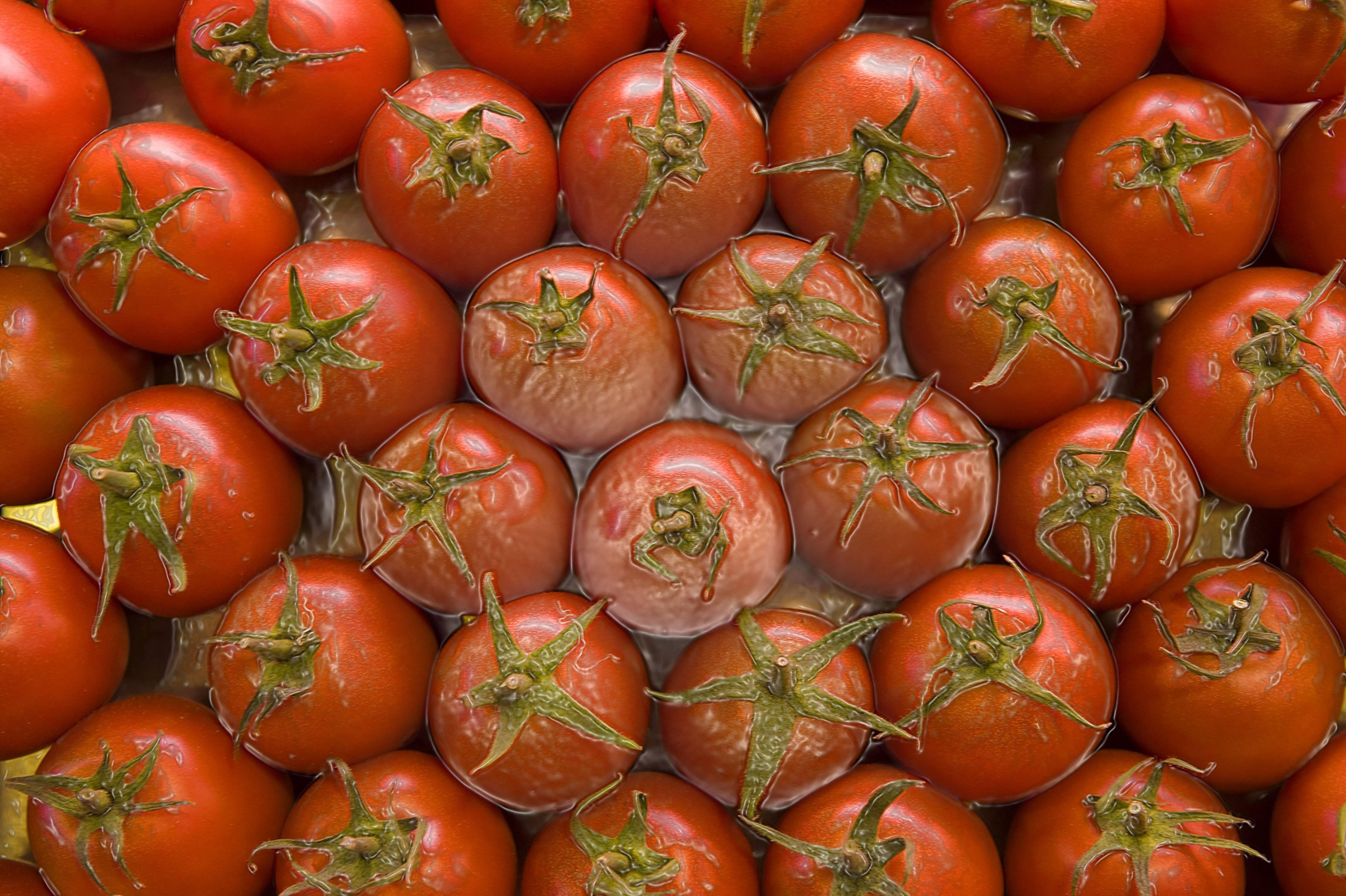 Rote Tomaten in Wasserbehälter