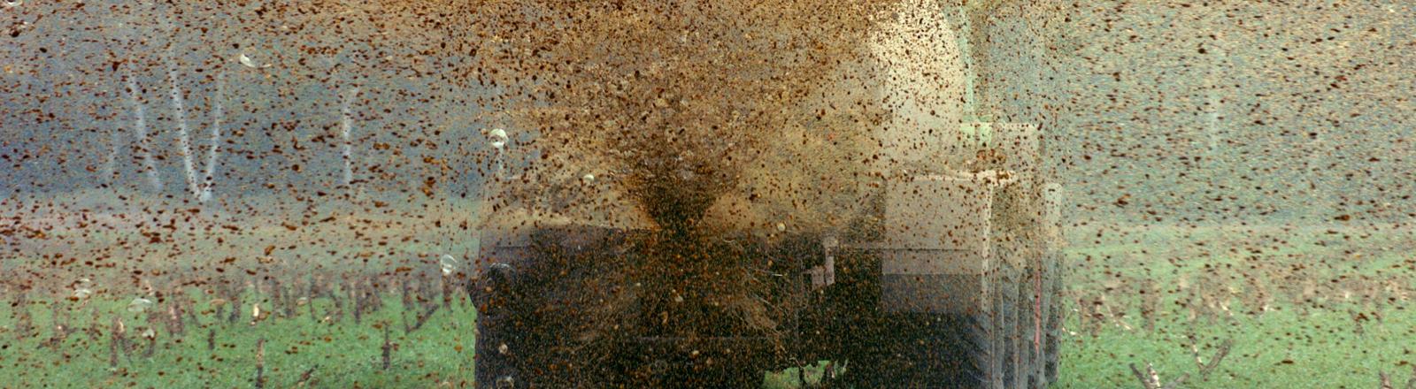 Rindergülle spritzt ein Landwirt in Wedemark (Region Hannover) am Dienstag (12.04.2005) aus einem von einem Traktor gezogenen Tankwagen auf seine sieben Hektar große Felder, um die Qualität des Bodens zu verbessern. Auf ihm wurde nach der Maisernte Grünroggen als Zwischenfrucht ausgebracht. In rund einem halben Jahr soll auf den mit Gülle besprühten Flächen wieder Mais geheckselt werden. In den Tankwagen passen 16 Kubikmeter Gülle.