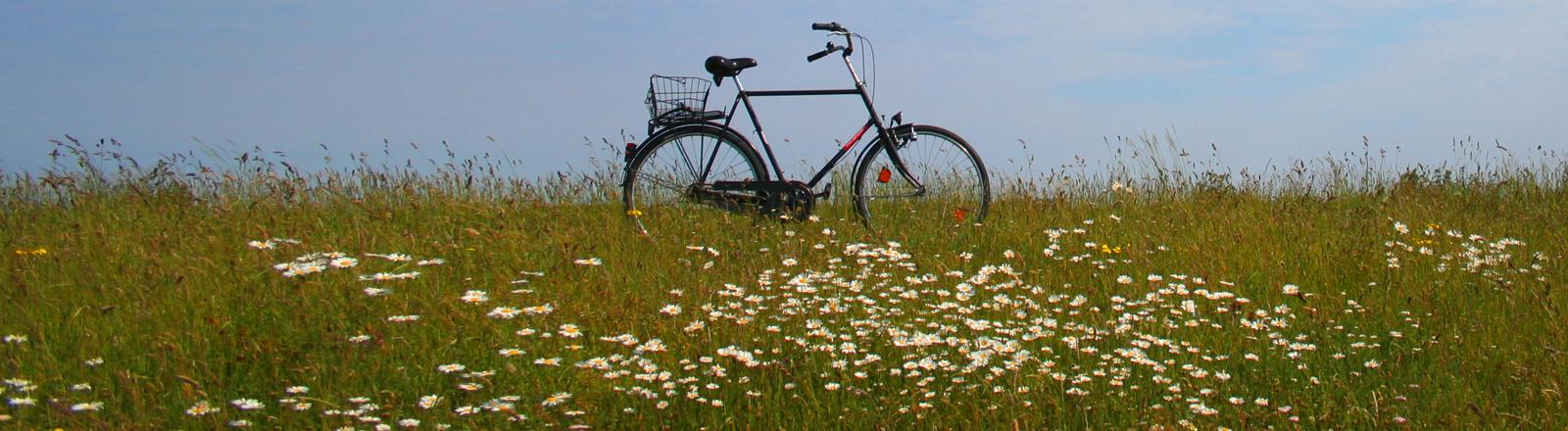 Ein Fahrrad für Herren im Feld mit Himmel.