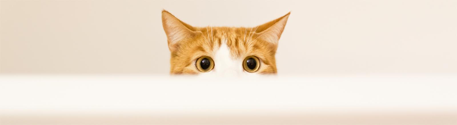 Eine Katze schaut über einen Badewannenrand.