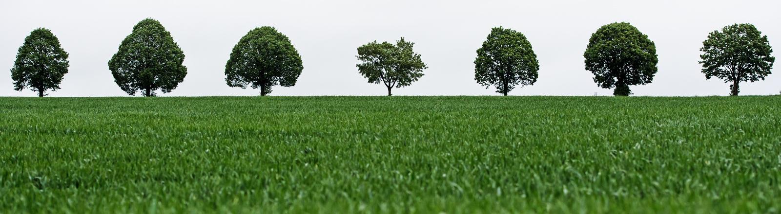 Ein bestelltes Feld mit Bäumen.