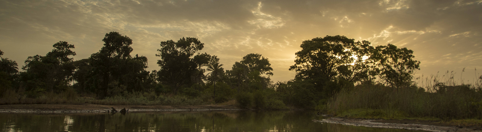 Mangrovenbäume vor einem Sonnenuntergang