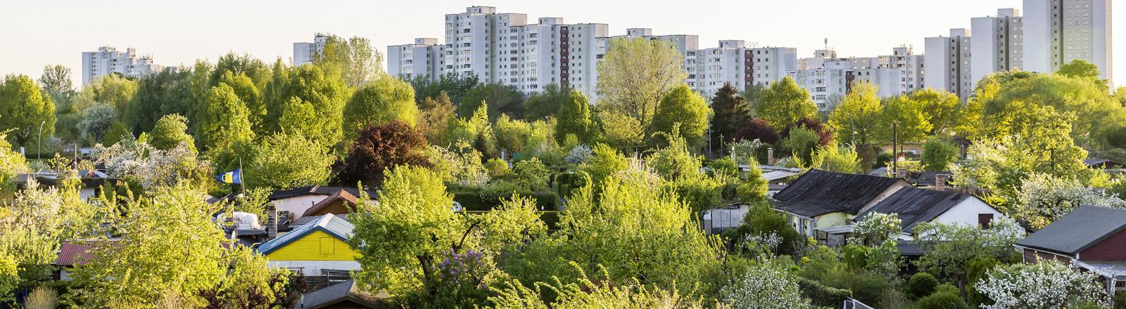 Kleingartenanlage am Berliner Plaenterwald.