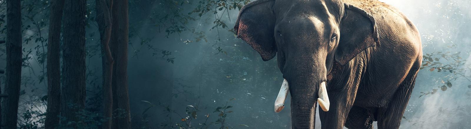Ein indischer Elefant im Wald.