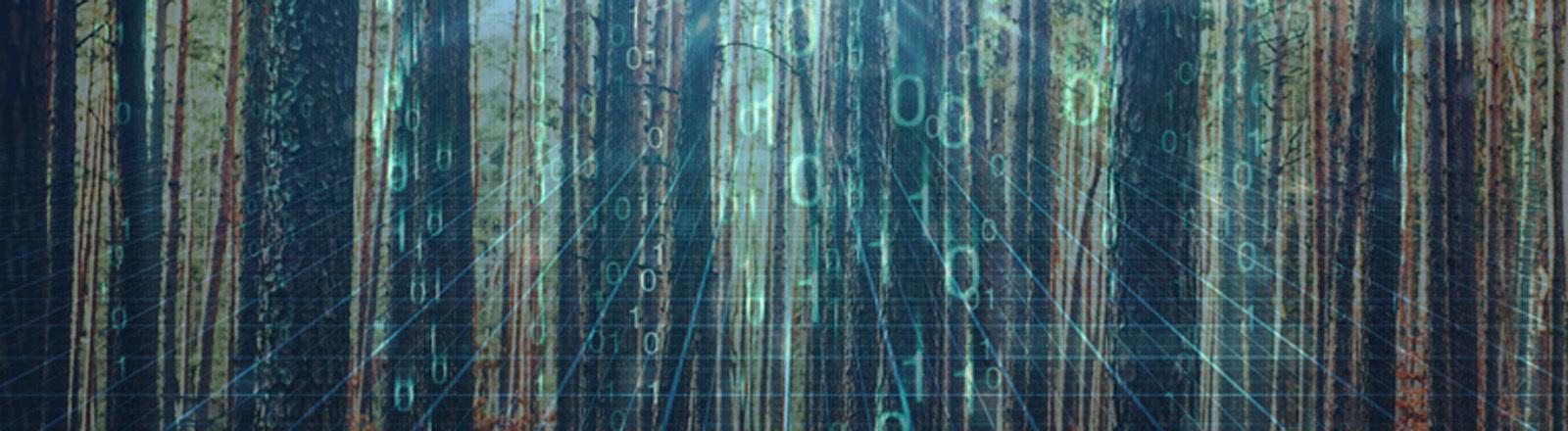 Wald überlappt mit Internetcodes