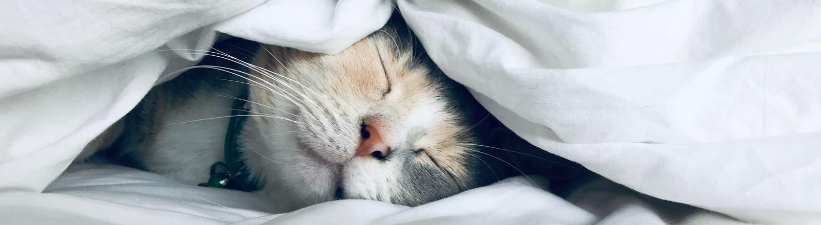 Eine Katze liegt schlafend unter einer weißen Bettdecke.