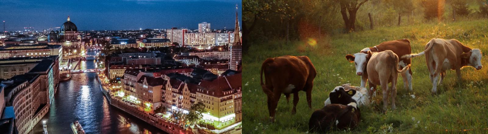 Links im Bild eine Stadt, rechts eine Kuhherde.