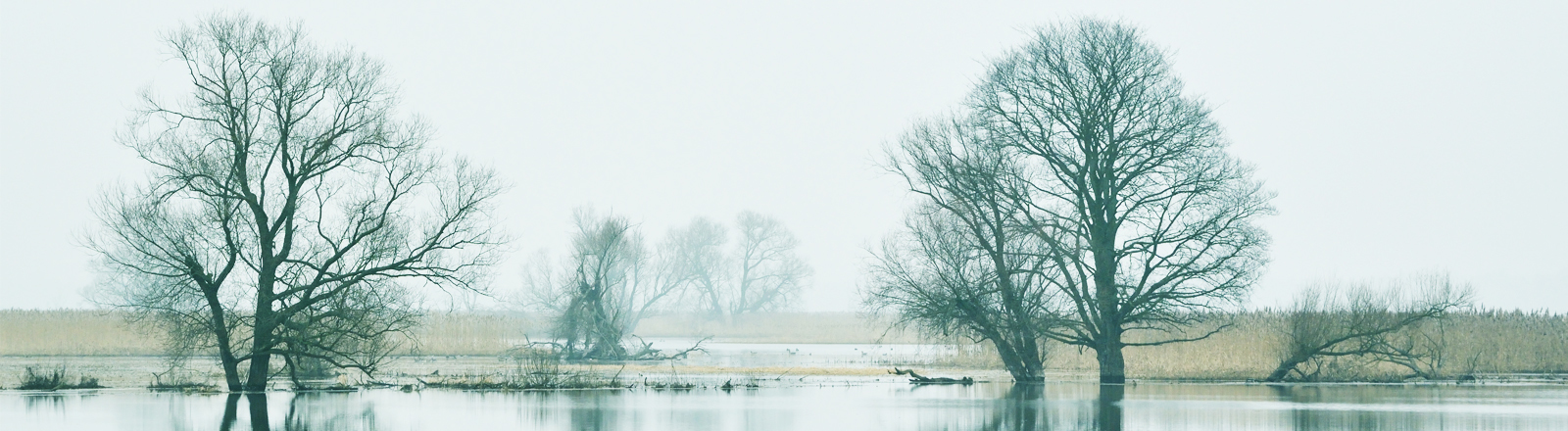 Der Blick auf die Oder im Oderbruch in Brandenburg