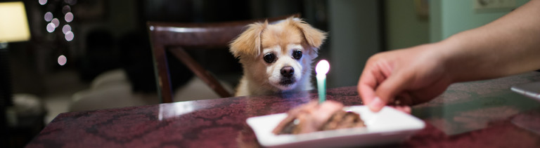 Ein kleiner Hund sitzt vor einem Geburtstagskuchen.