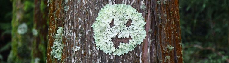 Moos an einem Baum in der Form eines Smileys.