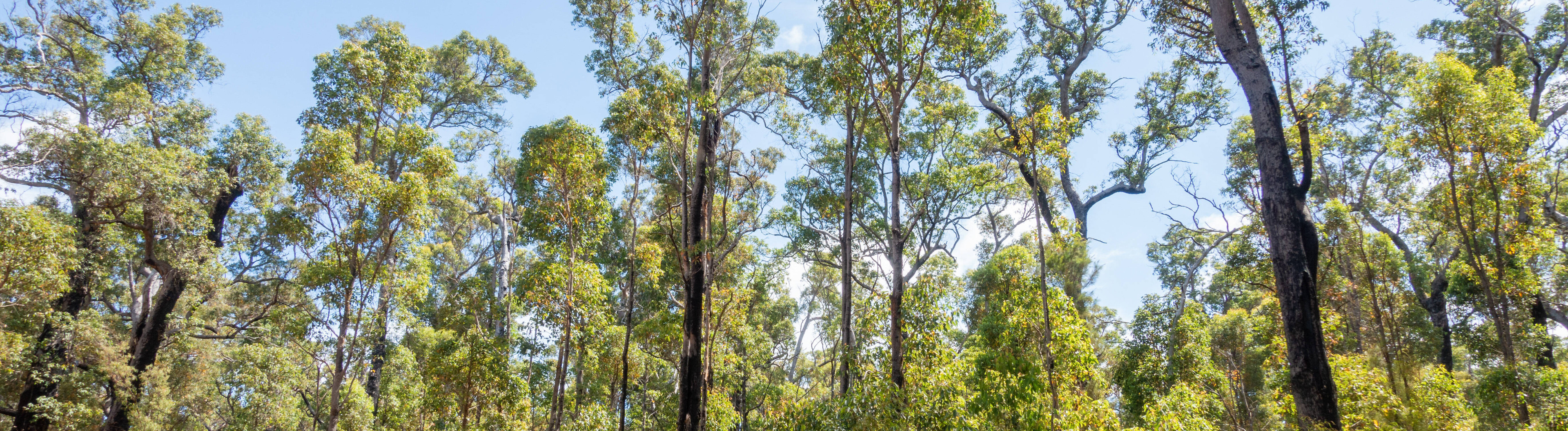 Wald in Australien aufgenommen am 1. Januar 2020