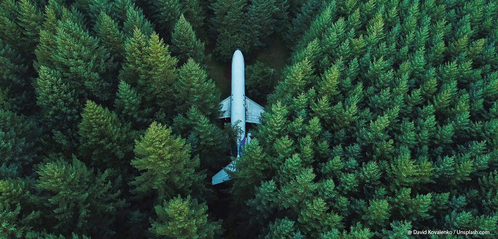 Flugzeug im Wald