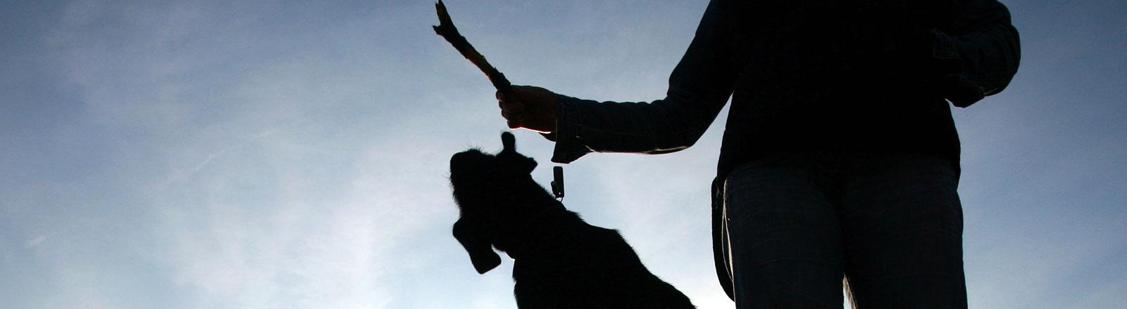 Ein Hund springt nach einem Stöckchen.