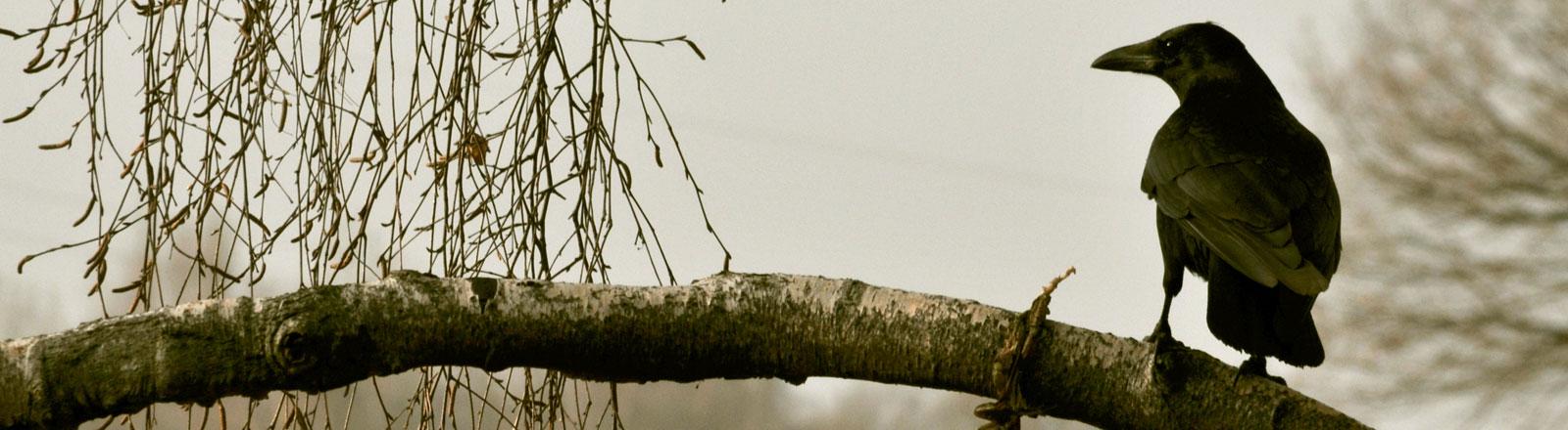 Eine Krähe auf einem Ast.