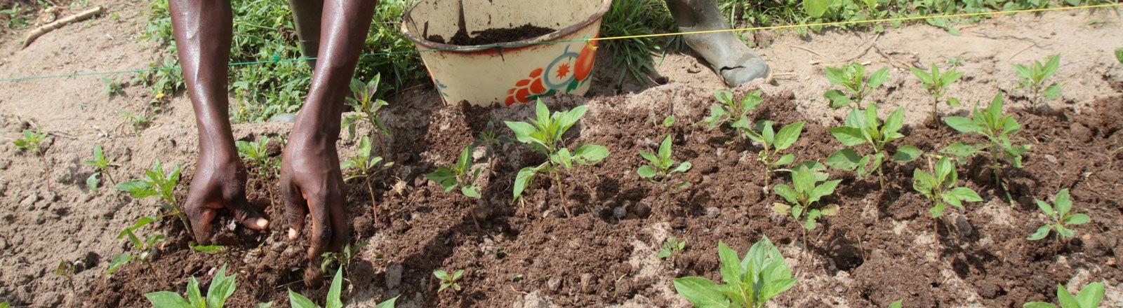 Bauer arbeitet auf dem Feld in Benin.