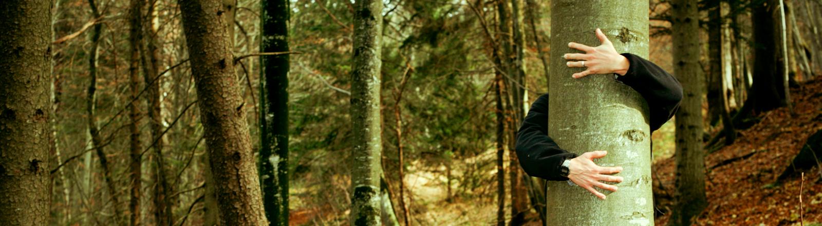 Ein Mann umarmt einen Baum im Wald.