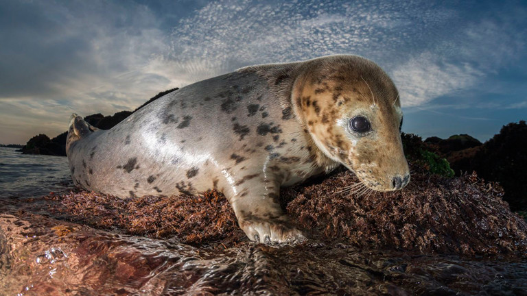 Eine Robbe, fotografiert von Uli Kunz