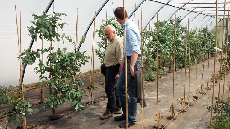Zoodirektor Jörg Junhold und Ulf-Peter Schilling besichtigen gemeinsam die Eukalyptus-Plantage.