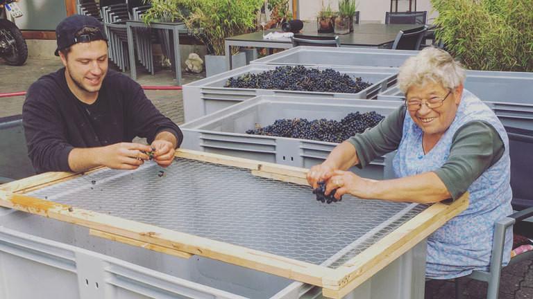 Andreas Weigand verliest mit seiner Oma die geernteten Trauben aus dem eigenen Anbau.