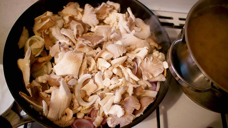 Selbstgezüchtete Pilze in der Pfanne.