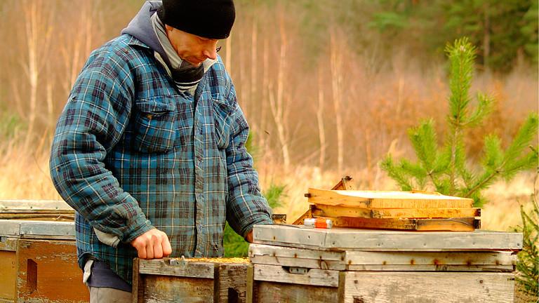Dete Papendieck an seinen Bienenstöcken