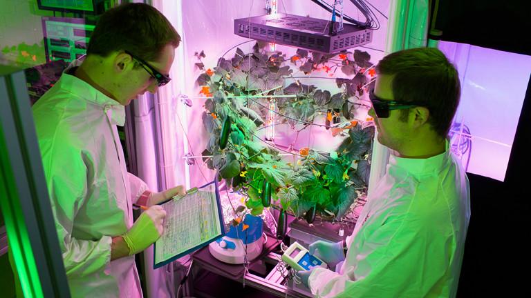 Projekt EDEN ISS, Deutsches Zentrum für Luft- und Raumfahrt (DLR)