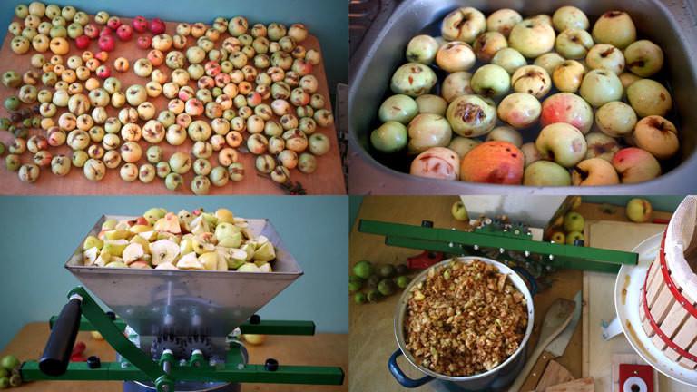 Apfel werden geschreddert und gepresst.