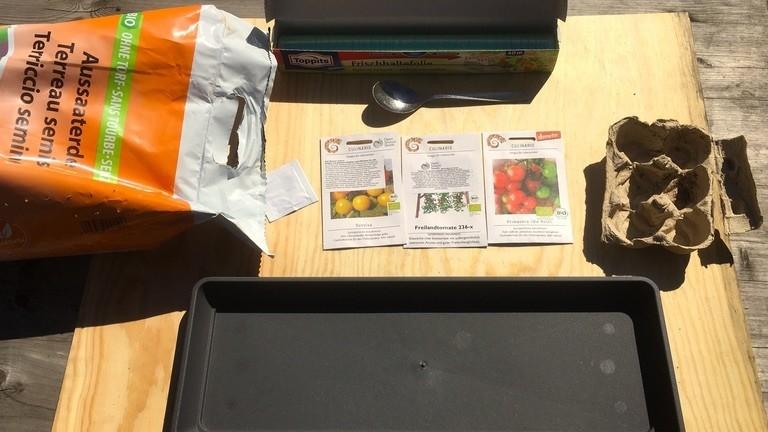 Moritz Metz pflanzt Tomaten.