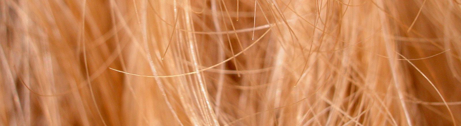 Blonde Haare in Nahaufnahme