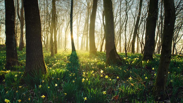 Frühlingswald, Eifel