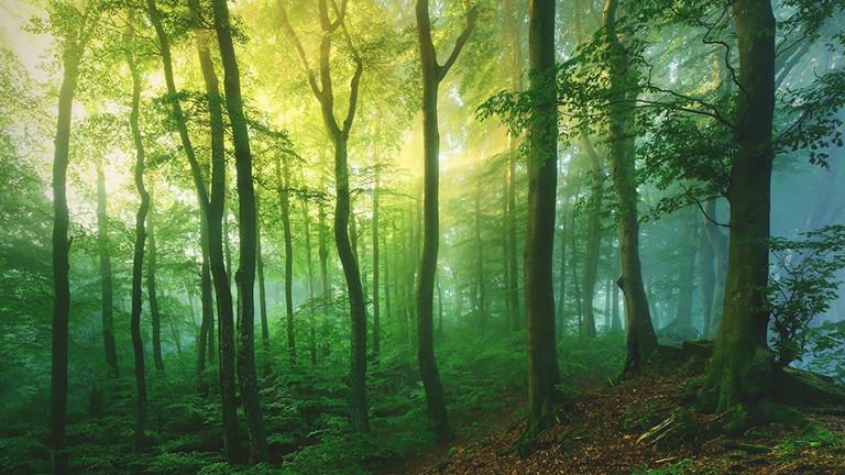 Waldlicht, Eifel