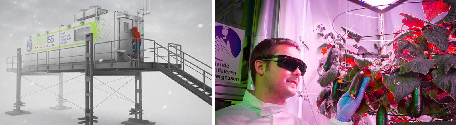 Paul Zabel vom Projekt EDEN ISS, Deutsches Zentrum für Luft- und Raumfahrt (DLR)