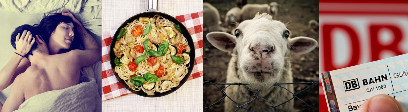 Die Bildkombination zeigt Sex, Essen, ein Schaf und einen Fahrschein der Deutschen Bahn.
