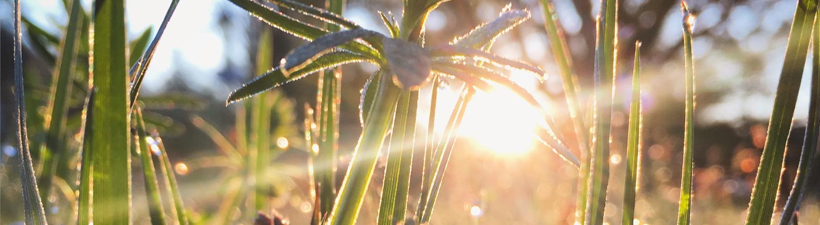 Blick auf grüne Gräser