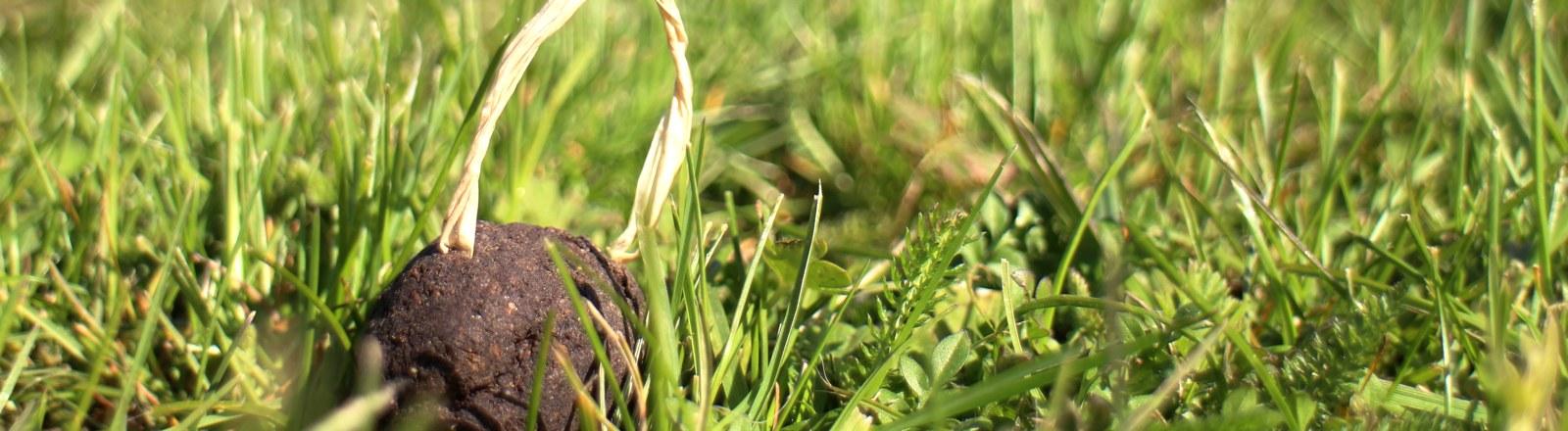 Seedbomb im Gras