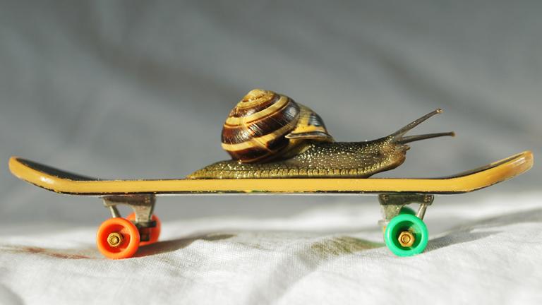 Eine Schnecke auf einem Skateboard