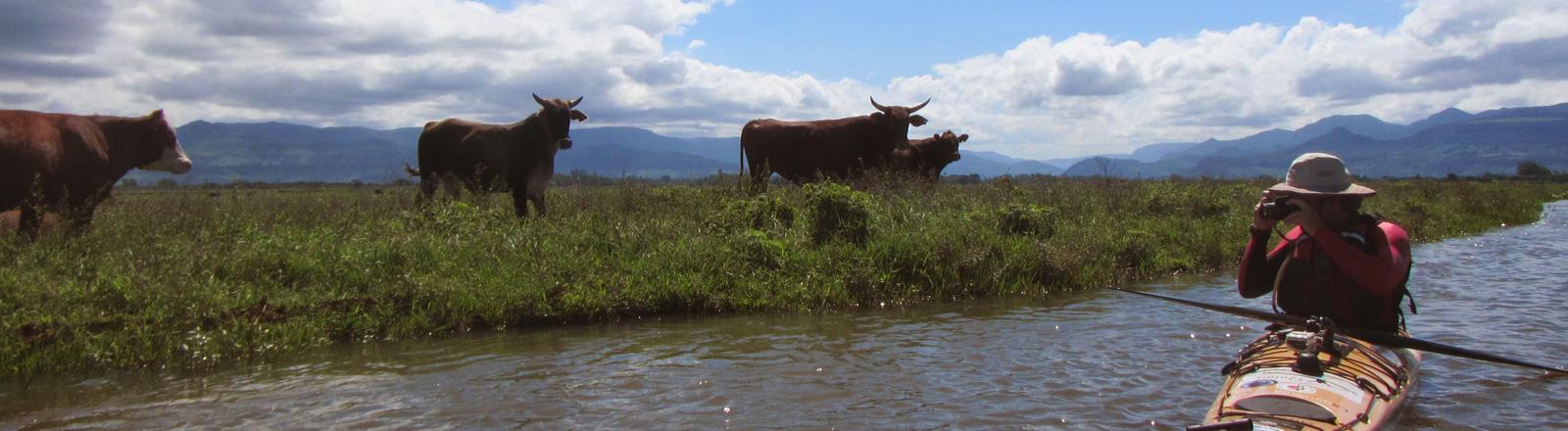 Freya Hoffmeister paddelt mit ihrem Kajak von Florianapolis nach Buenos Aires - und begegnet dabei auch Kühen.