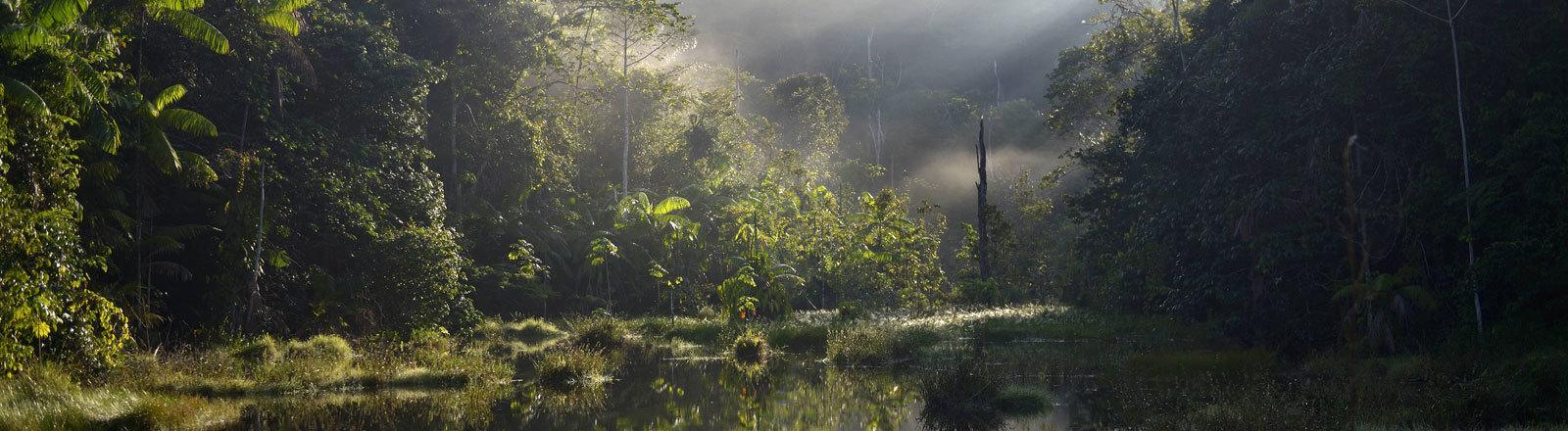 Amazonas-Regenwald in Para, Brasilien