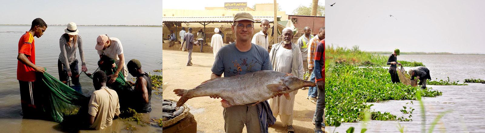 Fischkundler Timo Moritz trägt einen großen Fisch. Timo Fischer fängt mit Helfern und Kollegen Fische.