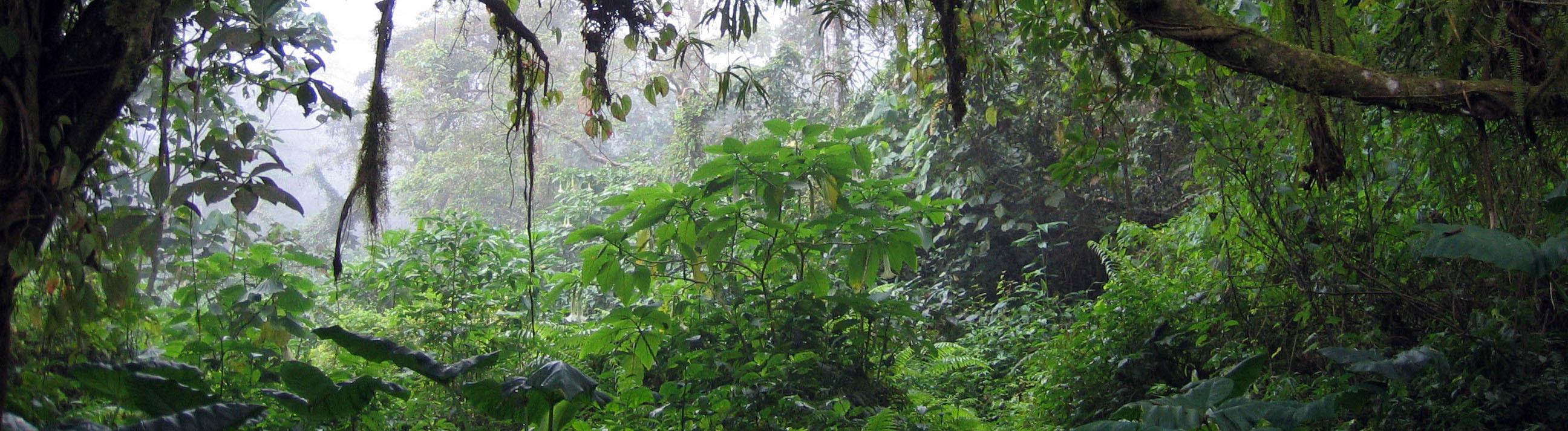 Kamerun Wald