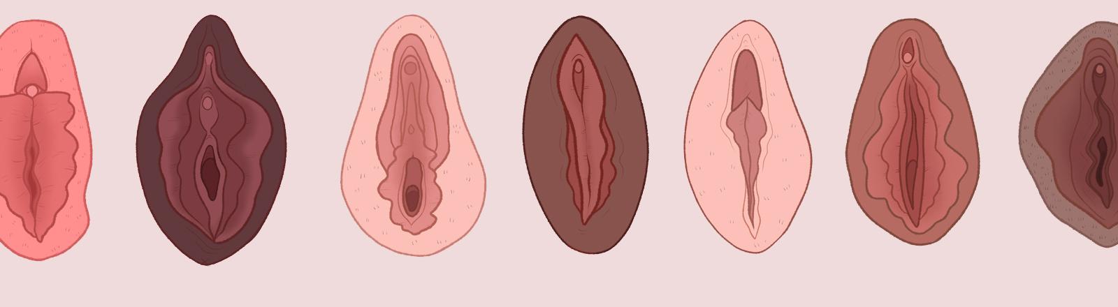Mehrere Vaginas nebeneinander.