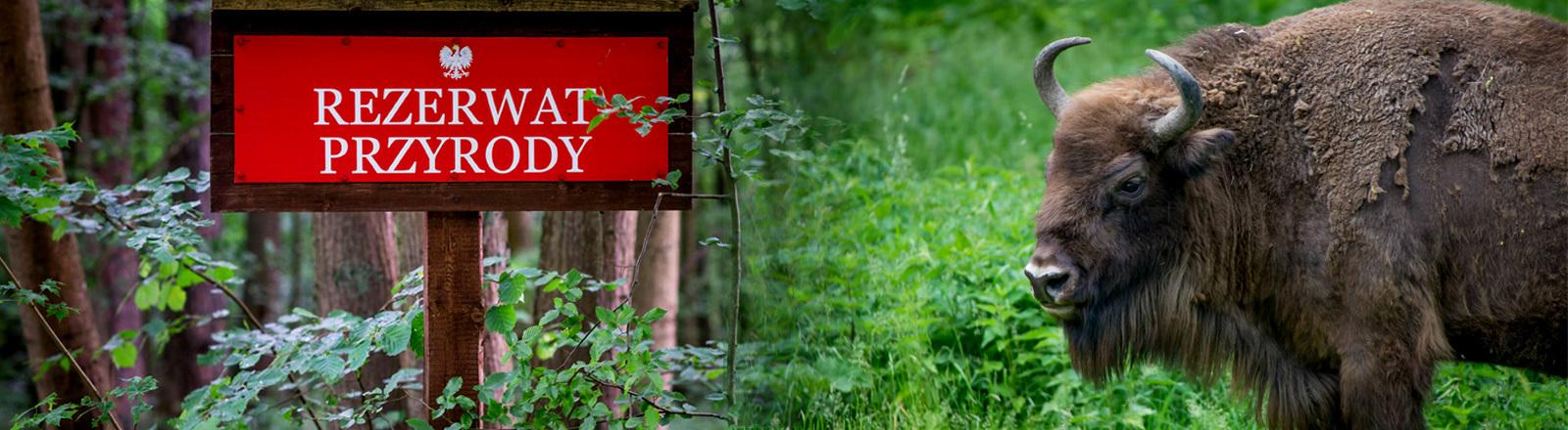 Wisent und Schild des Bialowieza Nationalparks