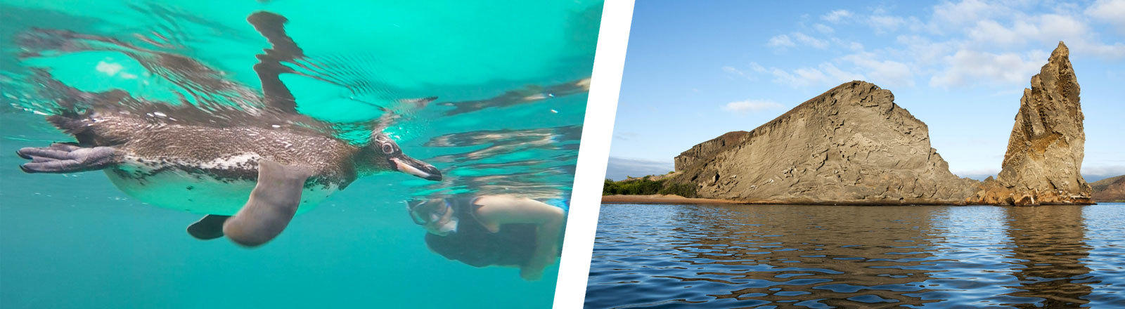 Collage: Frau schwimmt mit Pinguin, Pinnacle Rock, Galapagos