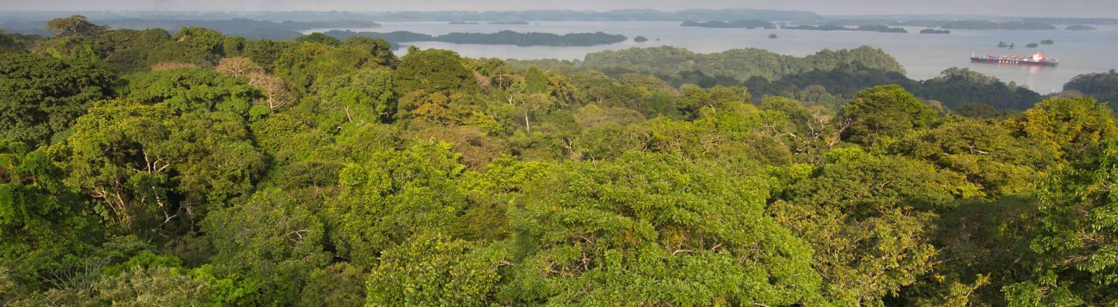 Regenwald in Panama