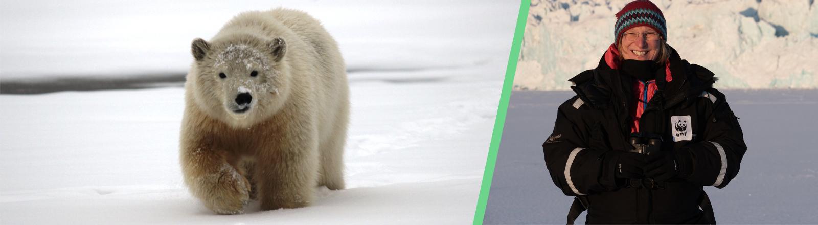 Collage: Foto links zeigt einen Eisbären in der Arktis; Foto rechts zeigt Sybille Klenzendorf ebenfalls in der Arktis, mit Mütze und dicker Winterjacke